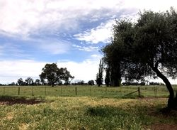 SOLD:   Lot 2, Cobram South Road, Cobram
