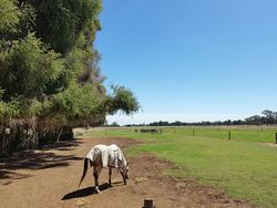 SUPER HORSE CATTLE OR SHEEP PROPERTY